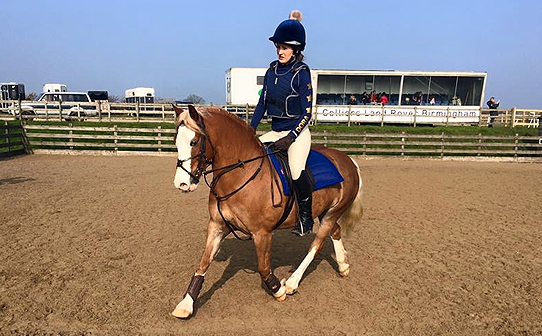 Rider in navy and gold bespoke xc colours